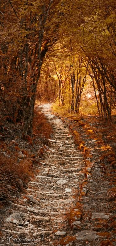 Autumns Path, Greece by Kate Eleanor Rassia