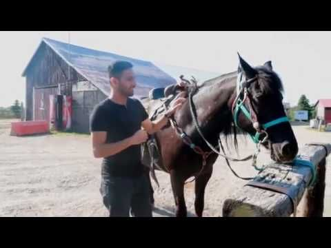 ZaidAliT Gets Attacked By A Horse! - YouTube