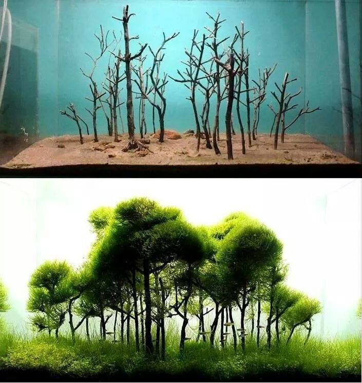 I love this real world feel underwater! Aquascape