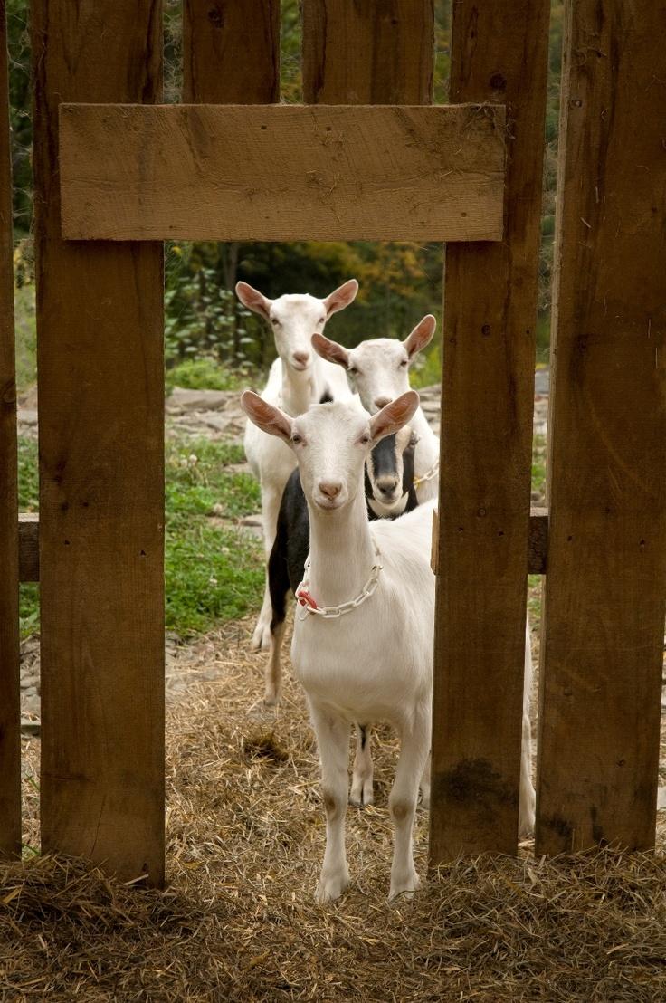 581 best Gettin my backyard farm on!!! images on Pinterest ...