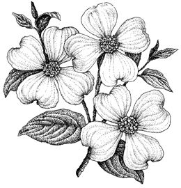 Impression Obsession - Cling Stamp -Dogwood 3 - By Aislinn Adams,$8.79
