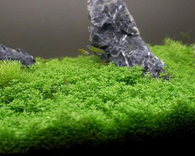 25 Best Ideas About Freshwater Aquarium Plants On