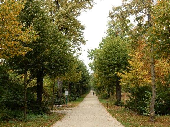 The park at Charlottenburg