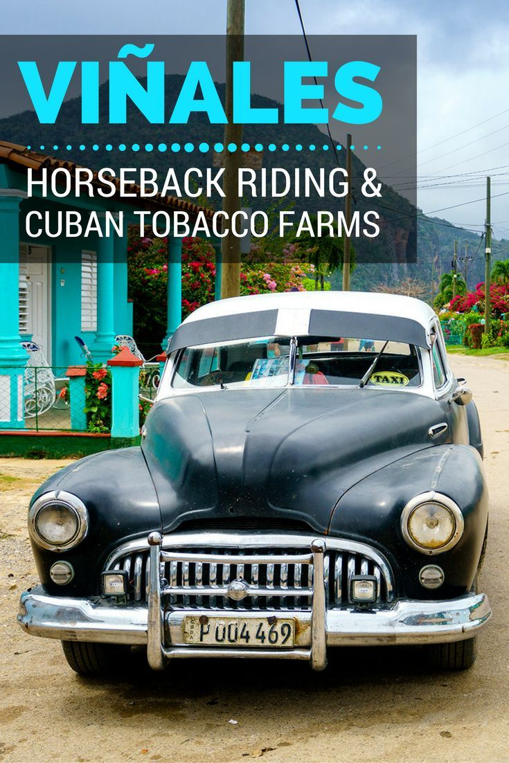 Riding through endless fields of green tobacco and fertile red soil in Vi�ales, we passed local farmers harvesting the leaves that would become Cuba�s world famous cigars.