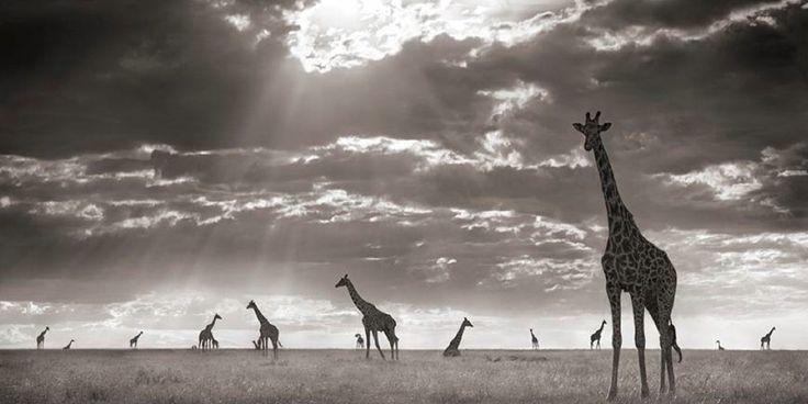 Africa by Nick Brandt