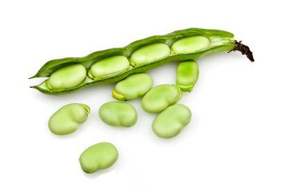 Granen en peulvruchten kom je niet tegen in het oermenu. Dit komt omdat deze voedingsmiddelen een hoge gehaltes hebben aan lectinen, fytinezuur en saponinen. Deze stoffen noemen we antinutriënten.