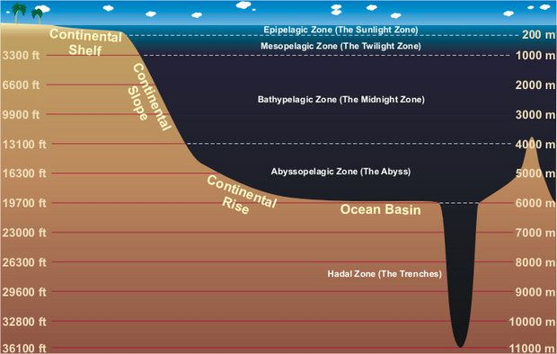 Great illustration of the ocean zones, continental shelf and continental slope.