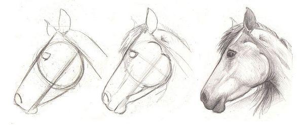 Wie zeichnet man einen Pferdekopf