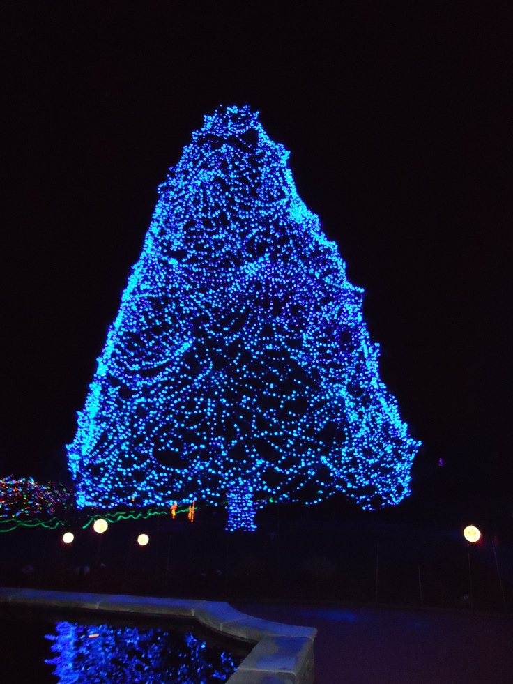 Toledo Zoo Lights Before Christmas. We get a pic in front of this every year :)