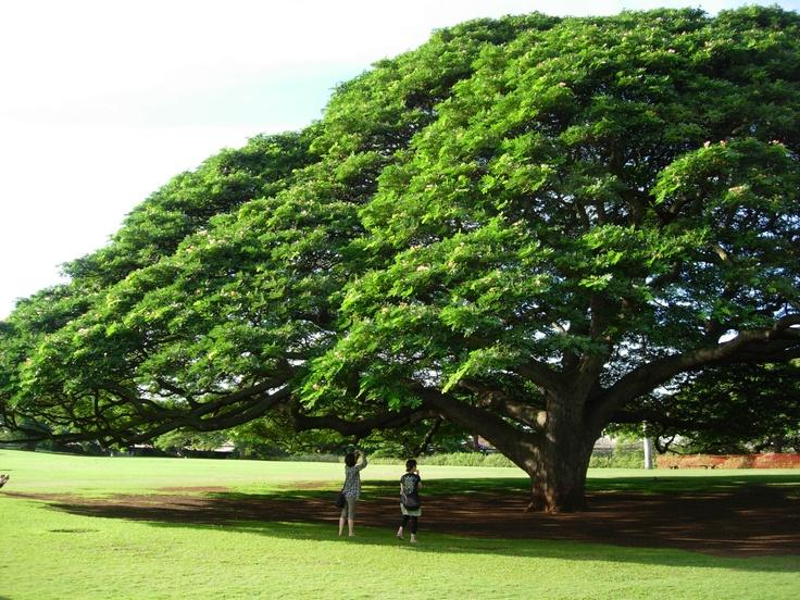 @oafu,Hawai