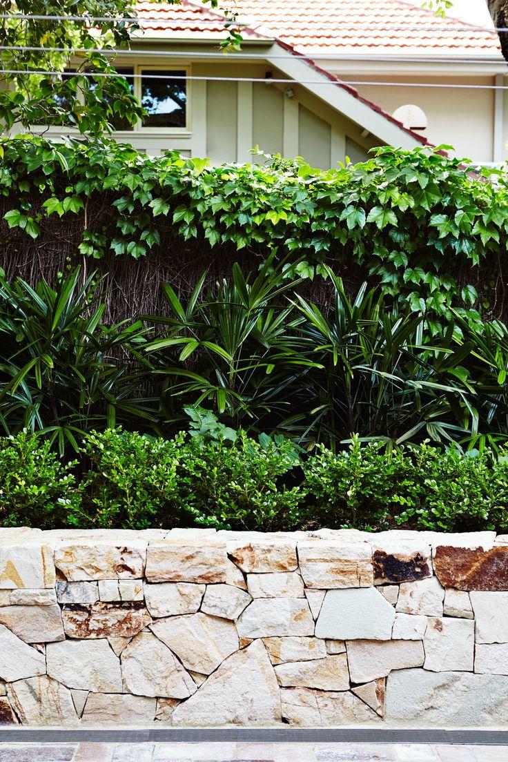 Rhapis Palms, Buxus and Stone walling - Outdoor Establishments