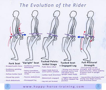 This series shows the transformation that the rider must go through to acquire an independent position, which is capable of balancing and harmonising with the horse's movement, and also generating the postural leverage which re-balances the horse, initiating the longitudinal stretch and engagement of the horse's postural ring.