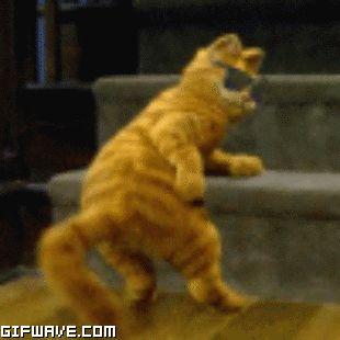 Gif garfield baile del gato feliz Viernes gato bailando garfield dancing