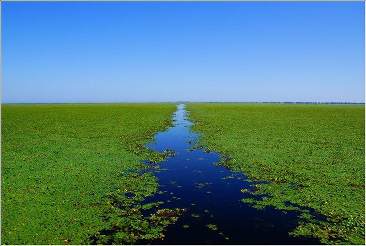 Danube Delta - Romania #romania