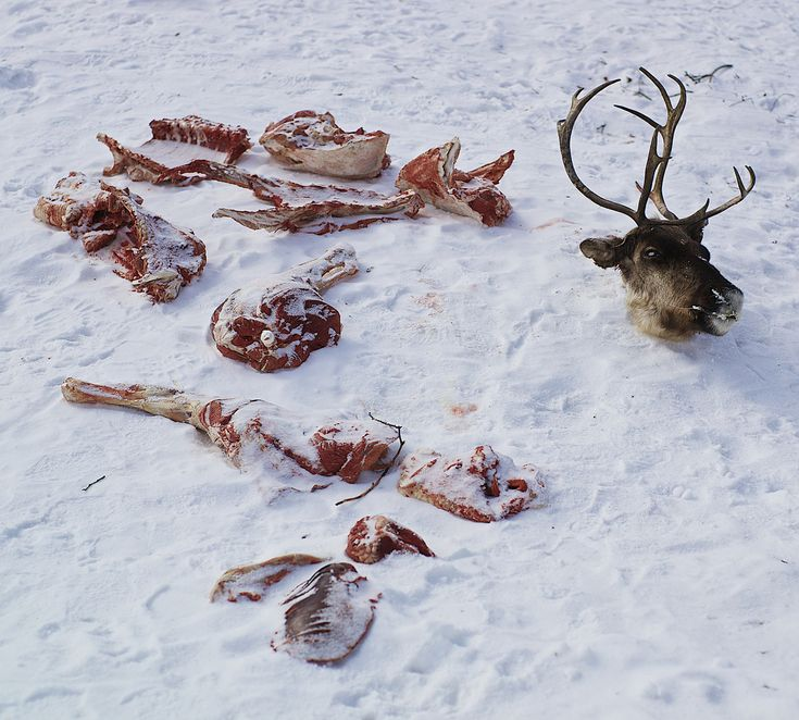 World Tour 2013-2014 - day 33  I spent 5 days in the even nomadic camp. Here is Vienamin, the owner of the reindeer herd. He killed a rein for the meat. The animal did not suffer since it was killed by a knife shot in the back of the neck. Cutting the animal lasted almost 2 hours, naked hand in a minus 15 degree temperature.  All Siberia lake places were inhabited side the Neolithic. In 3rd century the Huns migrations trough Centre Asia had big influence on migrations of others populations…