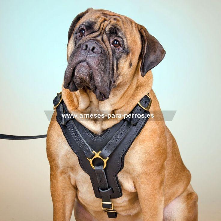 amazon comprar y personalizar collar para perros
