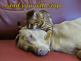 HypnoCat (x-posted from r/AnimalTextGifs) : funny