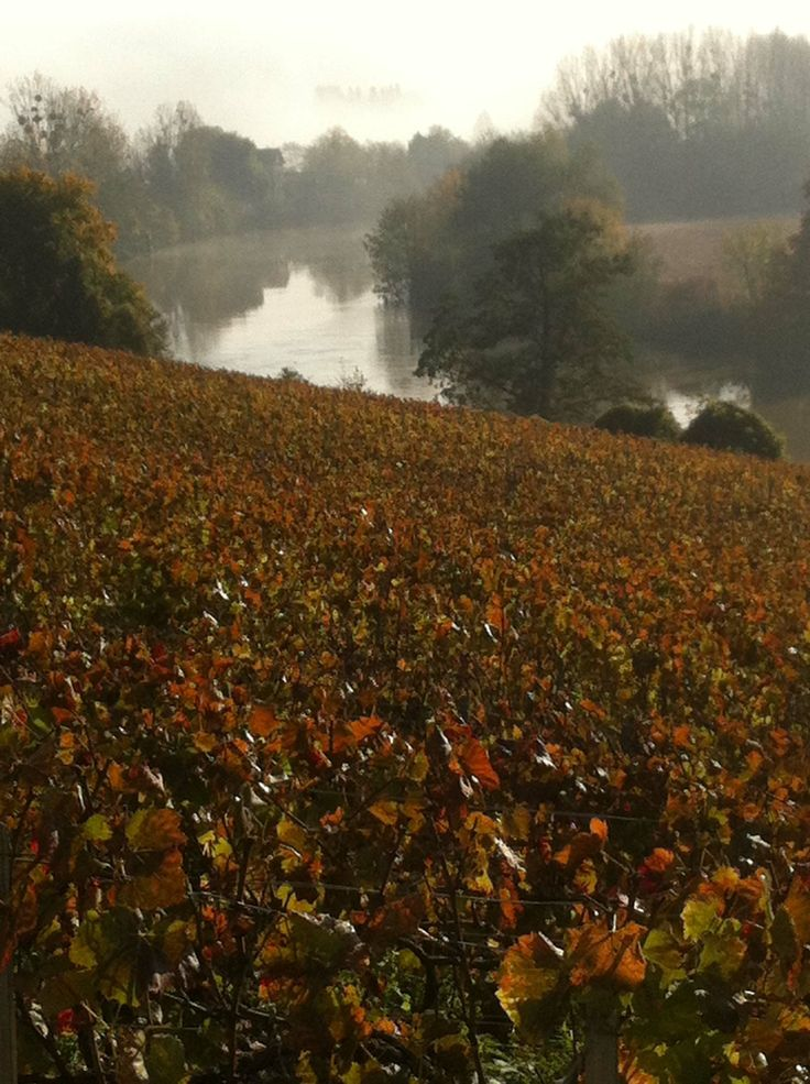 Vines on the banks of the River Marne