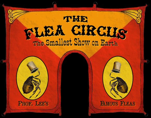 Flea Circus | ... Circus Sideshow and more Sideshow info. No sideshow toys or dolls