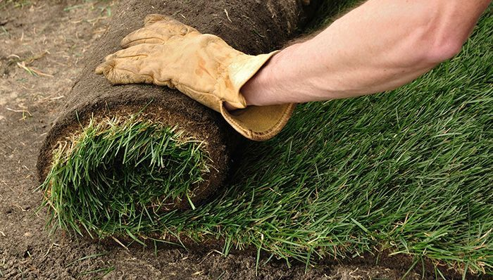 Buying And Installing Sod In 2020 Planting Grass Lawn Sod Sod
