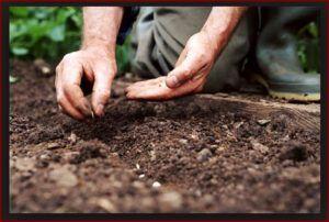gardening in western sydney