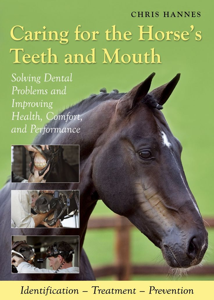 Best Horse Health Images On   Horse Tips Horse Care