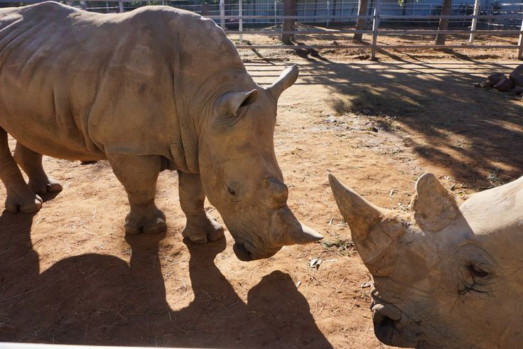 Just outside of Canberra is the National Zoo And Aquarium and Jamala Wildlife Lodge - one of the best wildlife experiences for animal lovers
