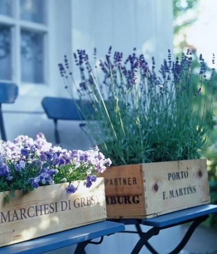 Niedrige Glockenblumen und hoher Lavendel sind perfekte Partner in ausgedienten Weinkisten vom Händler.