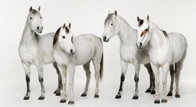 Fire hvite hester, Anja Niemi