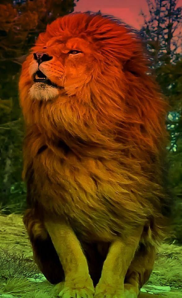Leon En Varios Filtros De Color Fotos De Animales Salvajes