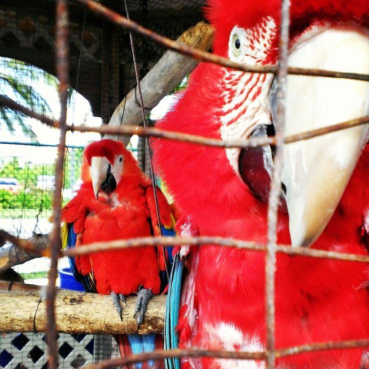 Birds of Paradise - Turks and Caicos