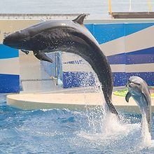 Photo of one large and one small animal soaring into the air. A dolphin & a false killer whale.