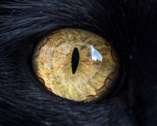 Andrew Marttila gato macro ojo9