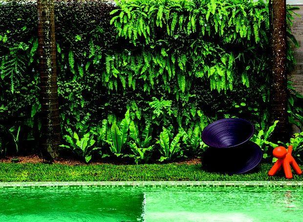 Samambaias, lambaris, chifres-de-veado e peperômias se misturam neste jardim vertical feito com vasos meia-lua presos a uma tela metálica. No chão, entre as palmeiras, renque de asplênios (Foto: Edu Castello / Editora Globo)