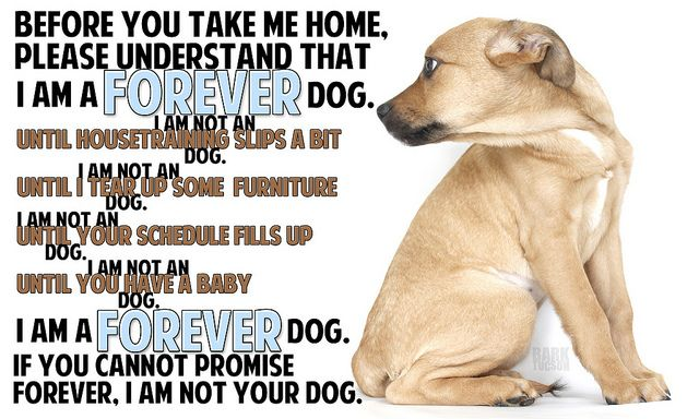 Forever: Dogs Animal, Cant, Dogs Leave, Pet, Animals Rescue Heroes, Animals Puppy, Pitbulls Doglover Animals, Dogs Life, Forever Dog