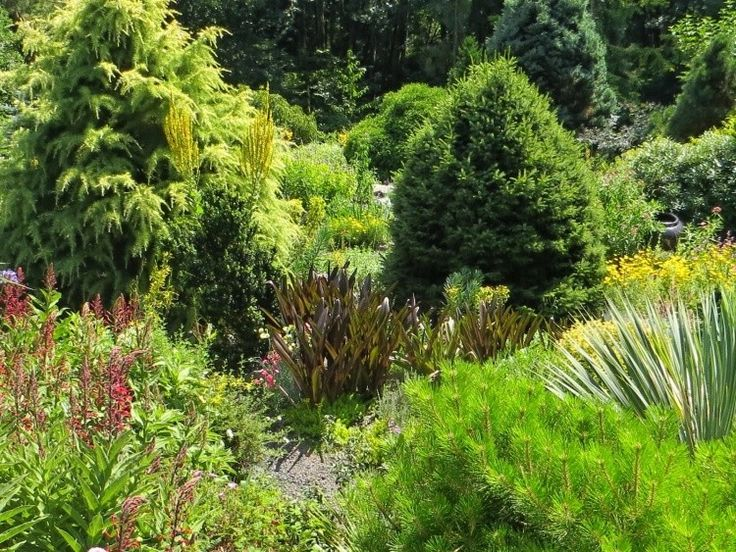 I naše zahrady jsou vystaveny nebezpečí přísušku a praskání půdy, trpí zvlášť stálezelené keře a jez