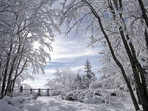 Winter-Wonderland-  Citadel Park in Calgary, Alberta, Canada
