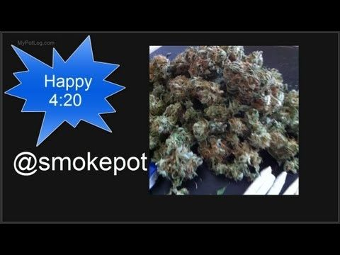 17 Best Images About Joey S Marijuana Grow Log On Pinterest Led Grow Medical And Bud