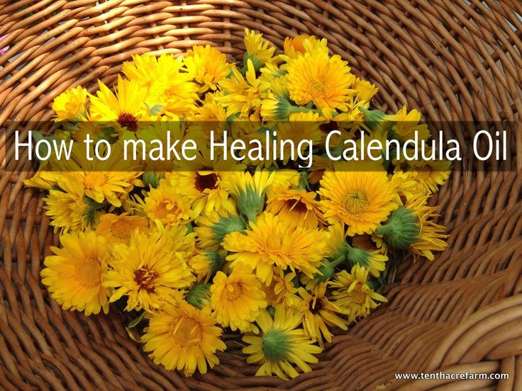 Make your own healing calendula oil infusion to use on scrapes, burns, and other skin ailments.