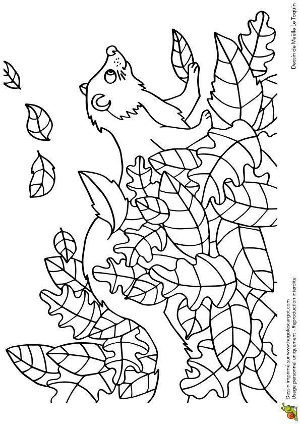 Coloriage cache cache feuilles furet sur Hugolescargot.com - Hugolescargot.com