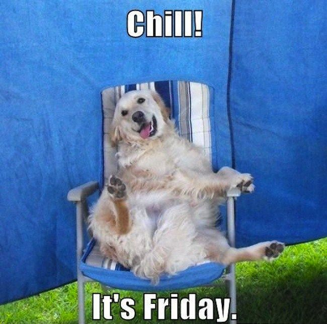 Image result for happy weekend pets