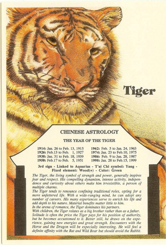 Zodiac Unlimited Chinese astrology postcard: Tiger