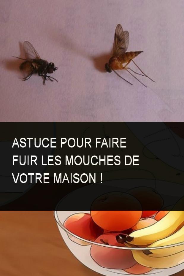 Faire Fuir Les Mouches : faire, mouches, Astuce, Faire, Mouches, Votre, Maison, #Mouche, #Mouches, #Maison, #Votre…, Mouches,, Astuces, Contre
