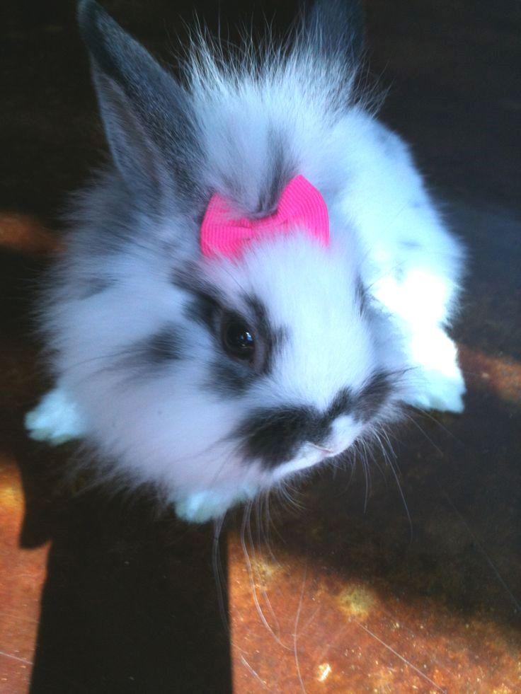 Pin On Pet Rabbit