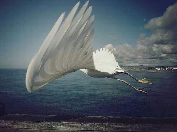 새_날개_바다