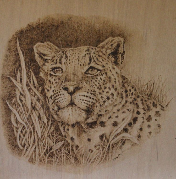 Watcher in the Grass Pyrography by Denise Ellison October 2015