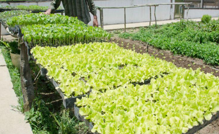 Cinco técnicas de controle de pragas para hortas orgânicas
