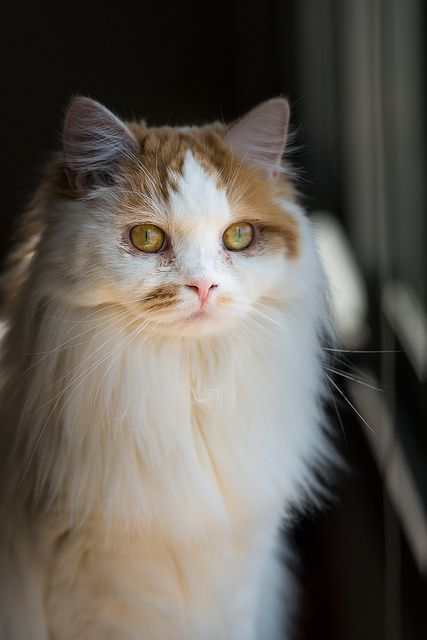 Kitteh Kats. Cat Fotos, Gato Gifs, gato engraçado, fotos do gatinho, muitos gatinhos. Você sabe, coisas gatinho. Kat, Kot, Katzen, Gatos, Gatitos, кошки, 猫, é sobre gatos