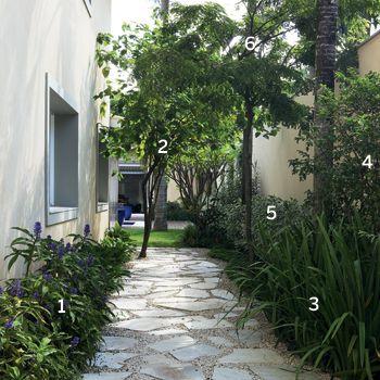 JARDIM - gengibre azul, amoreira, iris, manaca de cheiro, hibisco variegado, pau brasil