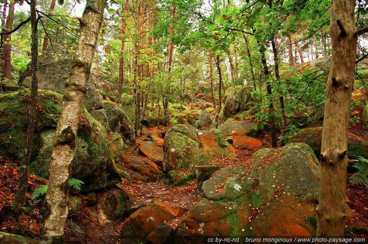 Gorges d'Apremont, Forêt de Fontainebleau - Barbizon, Seine et Marne, France
